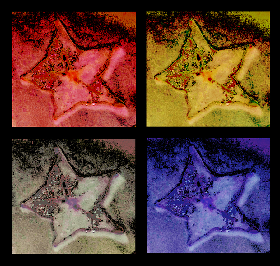 Warhol-style montage based on lumen print of a starfruit slice