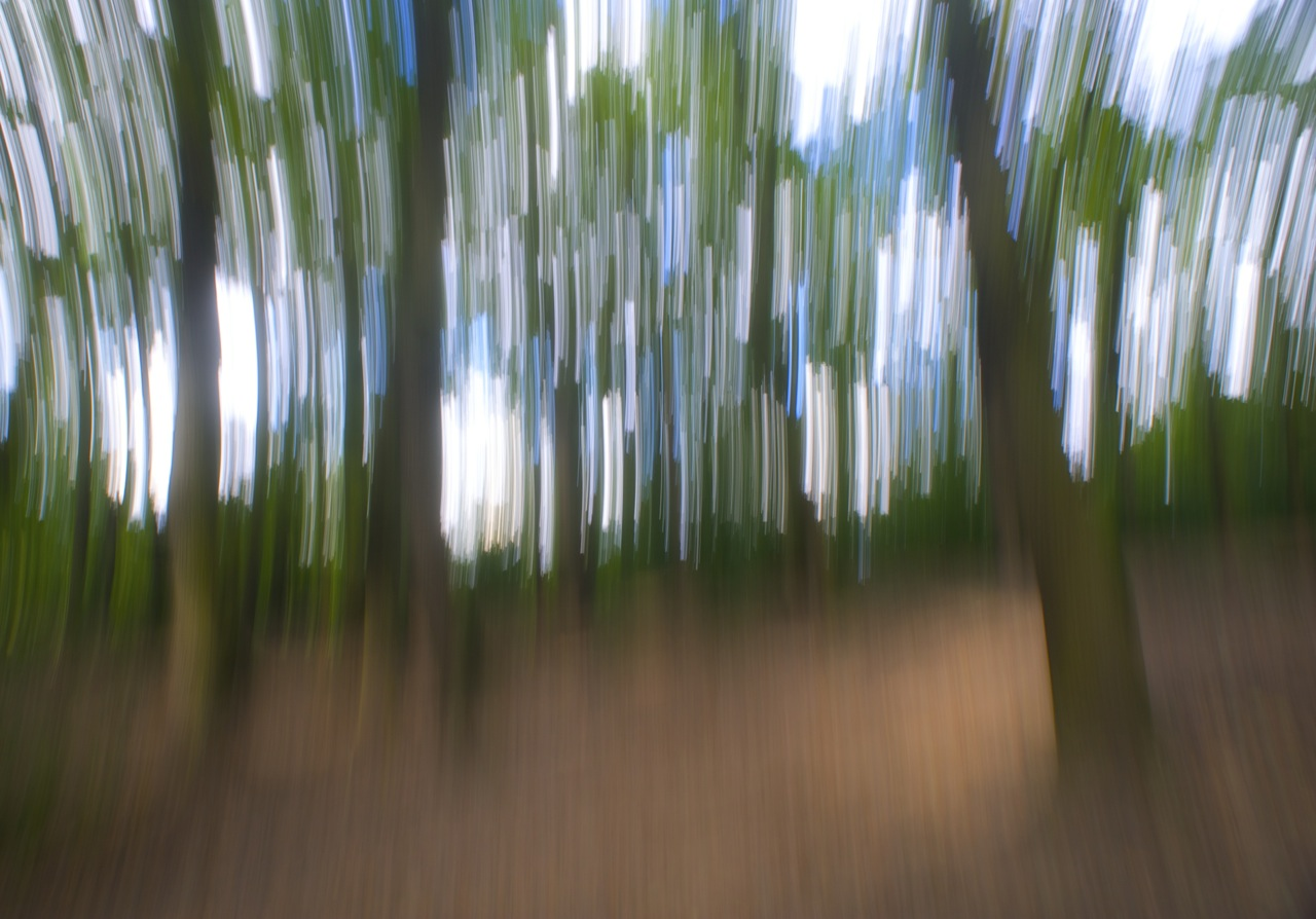 Woodland scene blurred by intentional camera movement photographed by Beowulf Mayfield