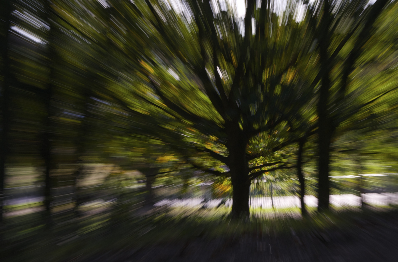Trees in Crystal Palace Park distorted with zoom burst by Beowulf Mayfield