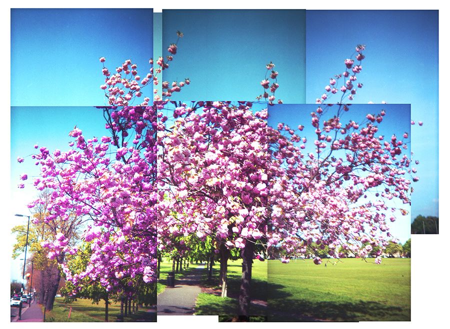 Multiframe picture of tree in blossom by Beowulf Mayfield